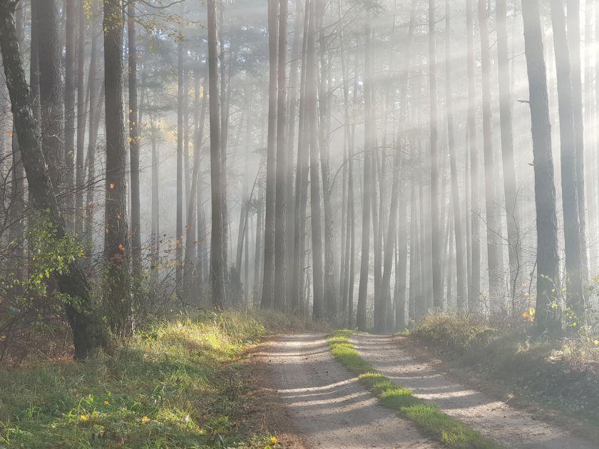 Laiką leidžiame lauke: 6 patarimai, kaip fotografuoti gamtą